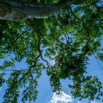 Arbor environnement