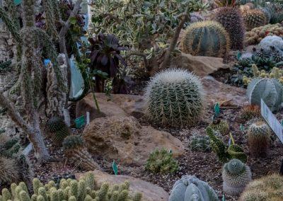 Serres - cactus - 2019 02 05 - Moulin à Tan Sens-35