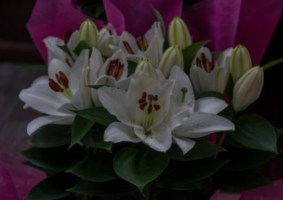 Garden-Flor Saint-Florentin Yonne15