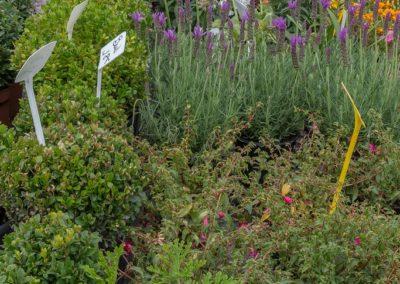 Garden-Flor Saint-Florentin Yonne2