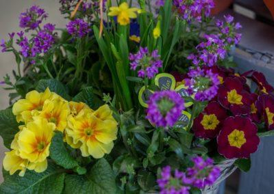 Garden-Flor Saint-Florentin Yonne25
