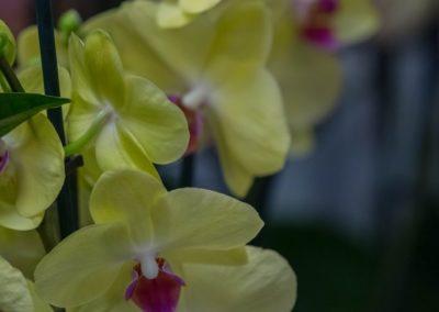 Garden-Flor Saint-Florentin Yonne26