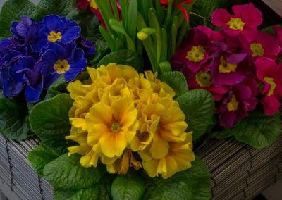 Garden-Flor Saint-Florentin Yonne29