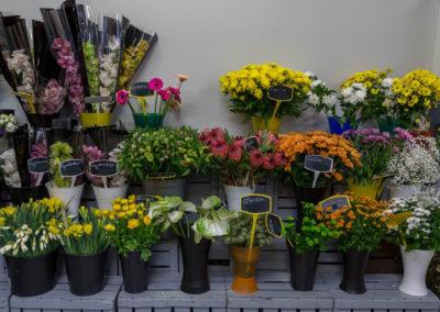 Garden-Flor Saint-Florentin Yonne33