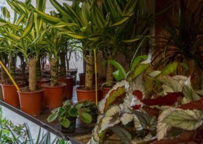 Garden-Flor Saint-Florentin Yonne37