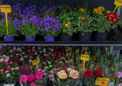 Garden-Flor Saint-Florentin Yonne43