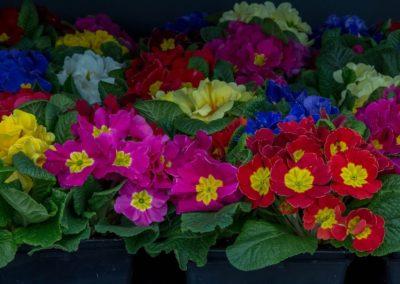 Garden-Flor Saint-Florentin Yonne44