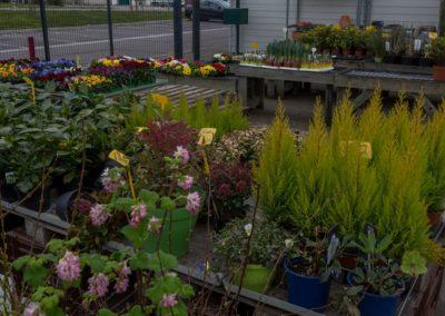 Garden-Flor Saint-Florentin Yonne46