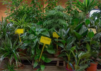 Garden-Flor Saint-Florentin Yonne50