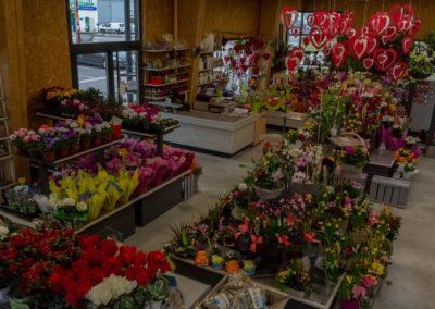 Garden-Flor Saint-Florentin Yonne51