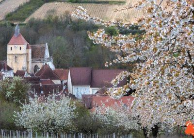 2019 04 06 - Les cerisiers de Jussy - YET89-1