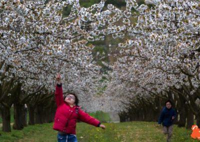 2019 04 06 - Les cerisiers de Jussy - YET89-13