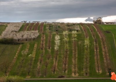 2019 04 06 - Les cerisiers de Jussy - YET89-23