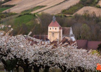 2019 04 06 - Les cerisiers de Jussy - YET89-3