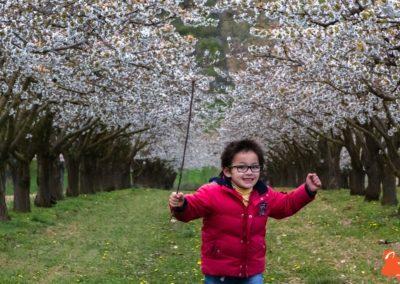 2019 04 06 - Les cerisiers de Jussy - YET89-7