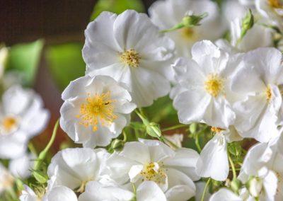 Les pommiers en fleurs du Pays d'Othe