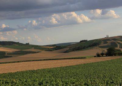 vignes et paysages - © Liliane Privé