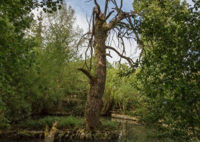 2019 05 17 - Jardin du Prieuré - 10