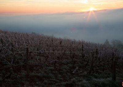 2019 05 17 - Vignes à Joigny - saints de glace (01 sur 31)