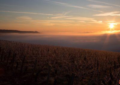 2019 05 17 - Vignes à Joigny - saints de glace (02 sur 31)