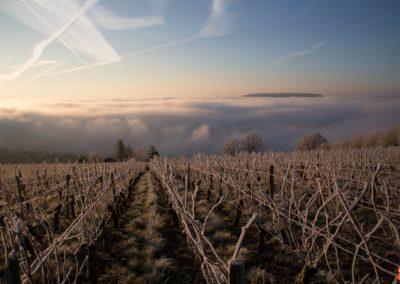 2019 05 17 - Vignes à Joigny - saints de glace (14 sur 31)