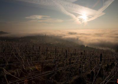 2019 05 17 - Vignes à Joigny - saints de glace (26 sur 31)