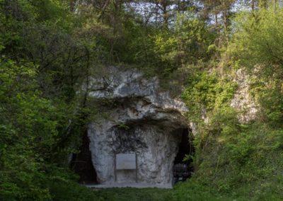 2019 - Forêt de Vauluisant- La champignonnière 01