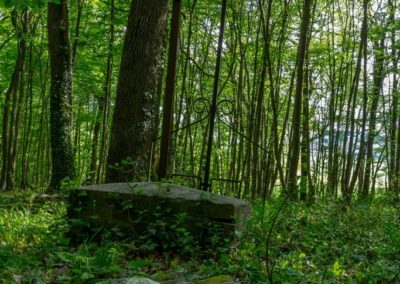 2019 - Forêt de Vauluisant - La croix des bois 02